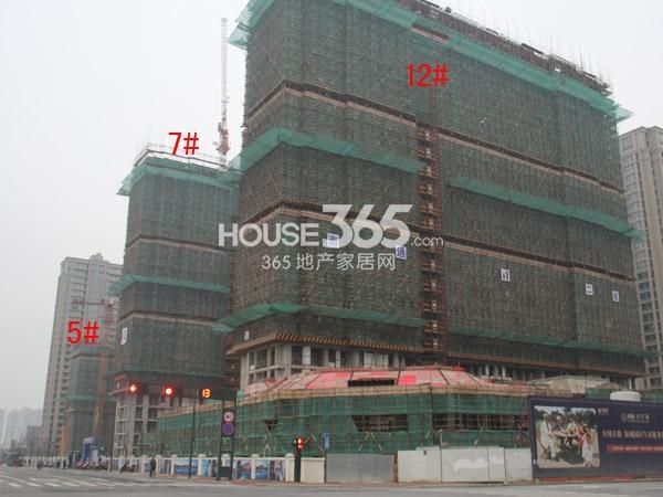 绿城玉兰广场5#、7#、12#楼工程进度图(2015.1)