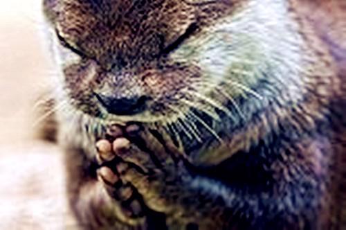 水獭餐前祈祷